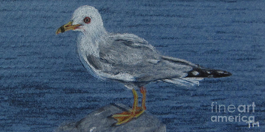 Ring-billed Gull Drawing  - Ring-billed Gull Fine Art Print