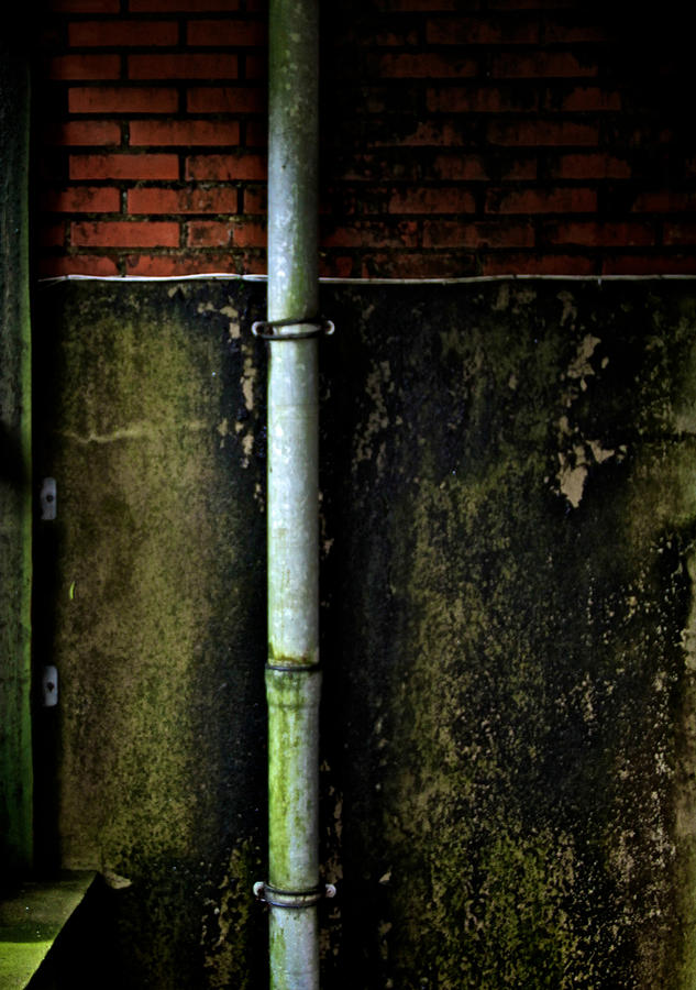 Rising Damp Photograph  - Rising Damp Fine Art Print