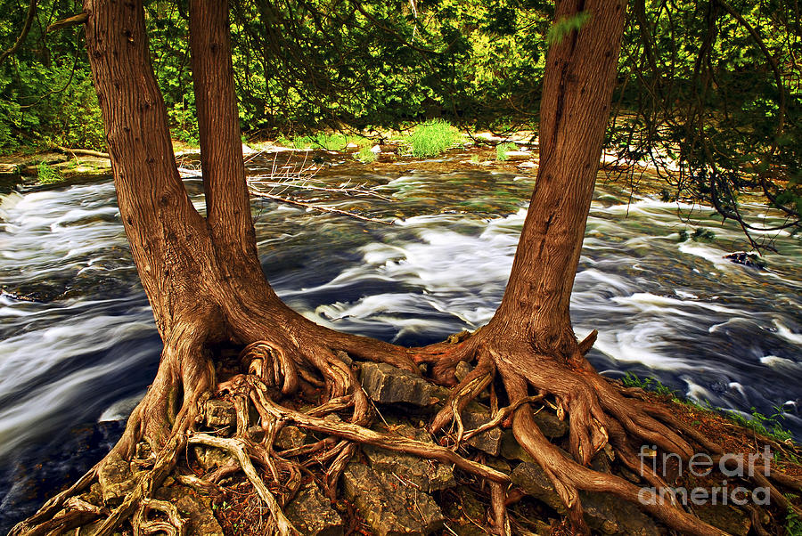 River And Trees Photograph