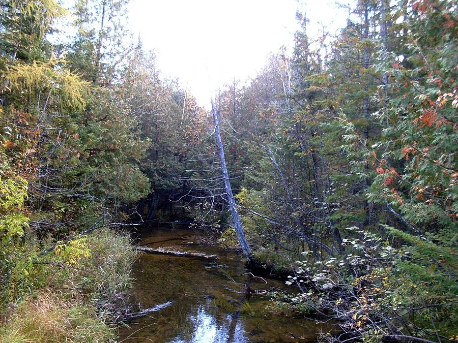 River In The Woods Photograph