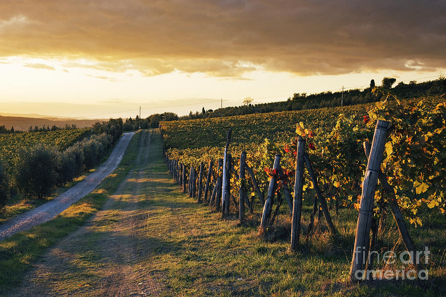 Alcohol Photograph - Road Through Vineyard by Jeremy Woodhouse