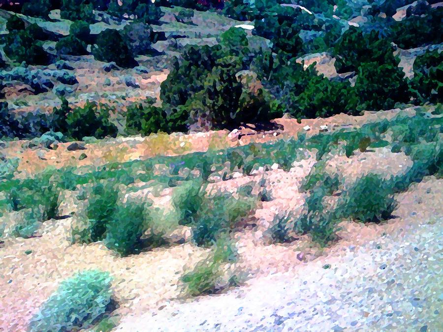 Roadrunner From Albuquerque To Santa Fe Photograph