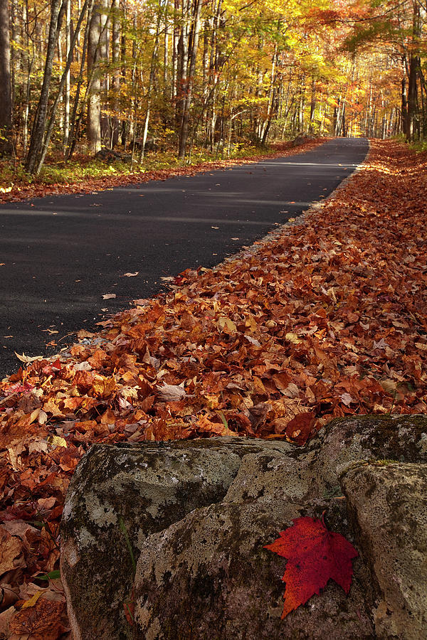 Roaring Fork Motor Trail In Autumn Photograph