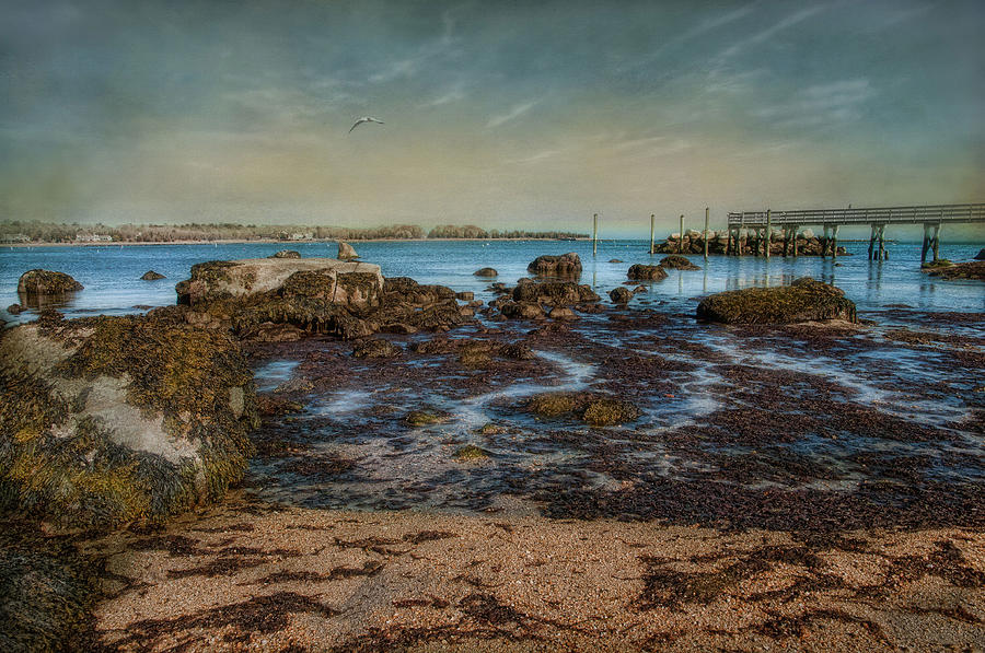 Beach Photograph - Rock Bottom by Robin-lee Vieira