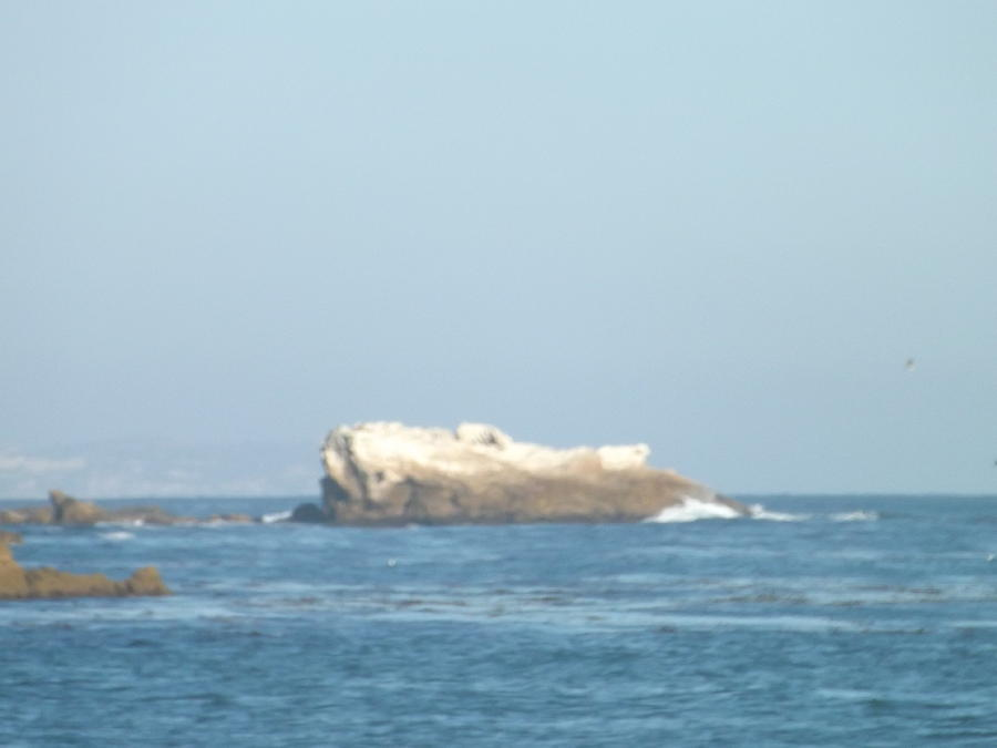 Rock On The Water Photograph