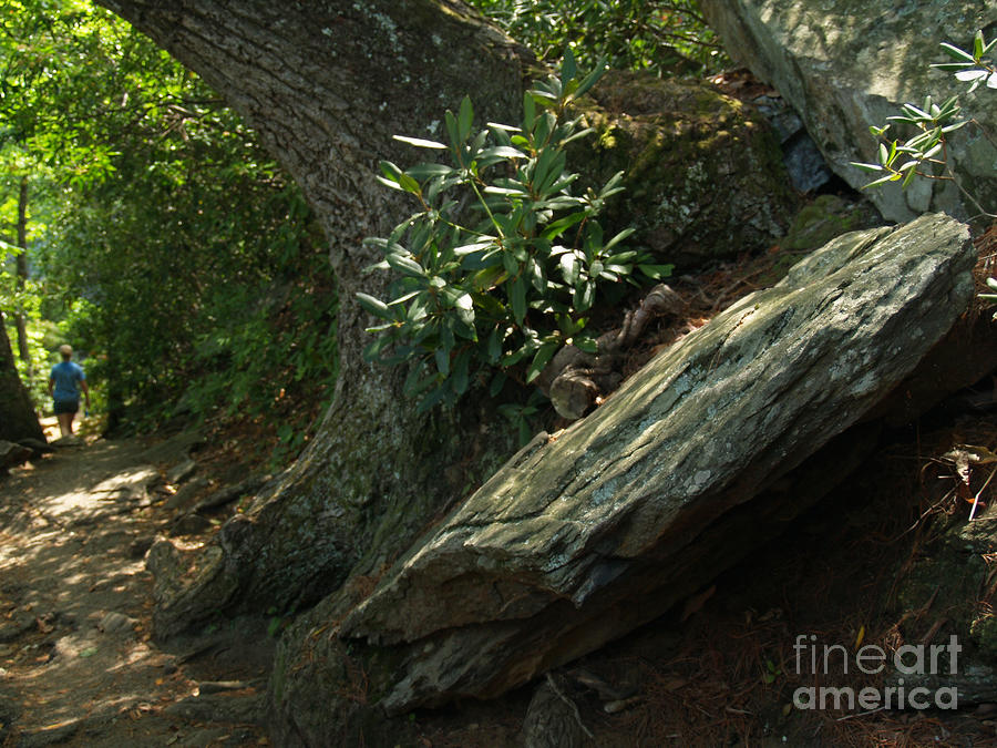Rocks And Rhododendron At Chimney Rock Photograph  - Rocks And Rhododendron At Chimney Rock Fine Art Print
