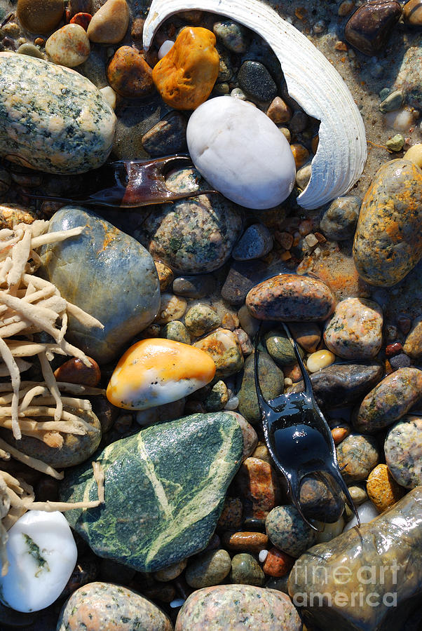 Rocks And Shells Photograph  - Rocks And Shells Fine Art Print