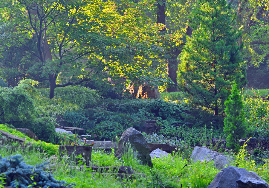 Rocky Morning Photograph  - Rocky Morning Fine Art Print
