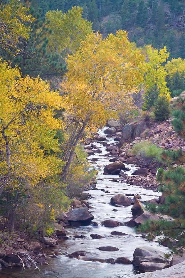 Rocky Mountain Golden Canyon Scenic View Photograph  - Rocky Mountain Golden Canyon Scenic View Fine Art Print