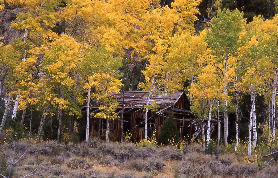 Rocky Mountain Homestead Photograph