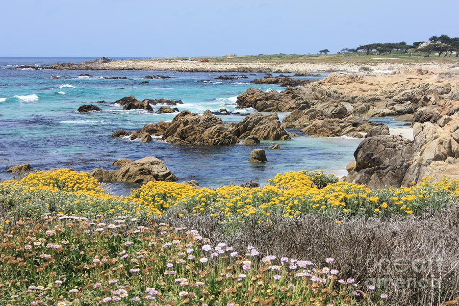Rocky Surf With Wildflowers Photograph