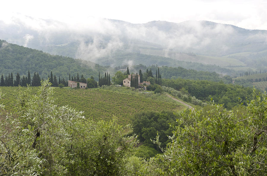 Rolling Green Hills, Wine And Olive Photograph