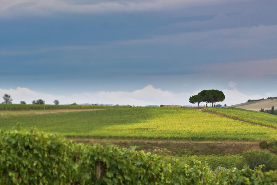 Rolling Tuscany 2 Photograph