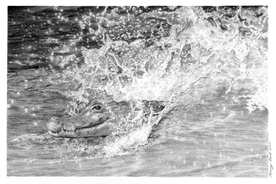 Ronny Hart Gator Splash Drawing  - Ronny Hart Gator Splash Fine Art Print