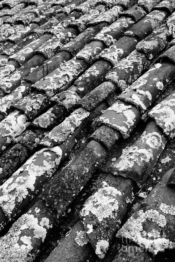 Roof Tiles Photograph  - Roof Tiles Fine Art Print