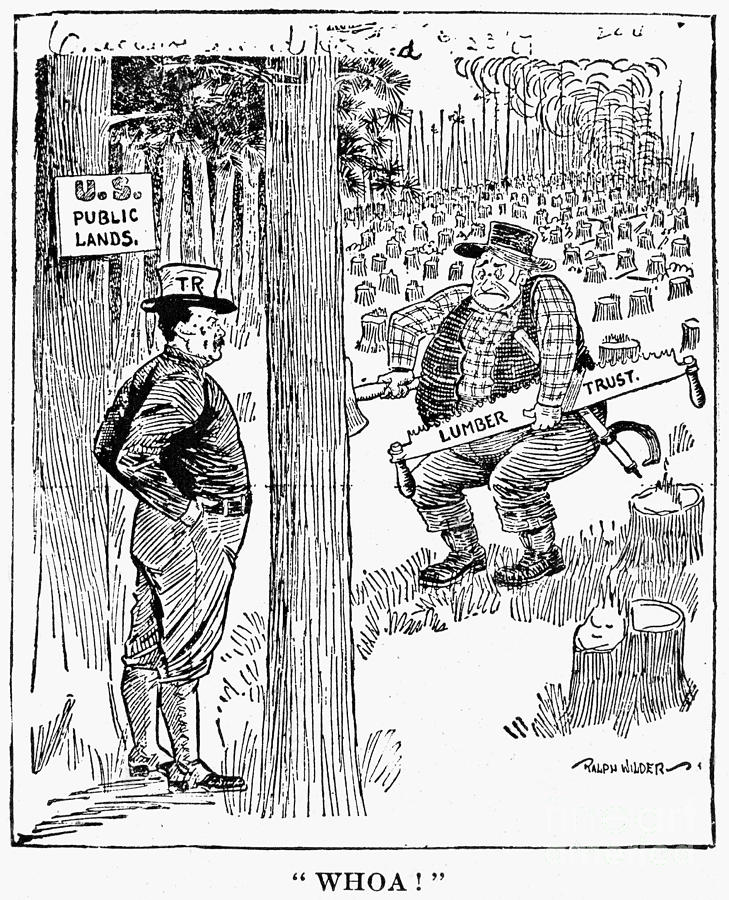 Roosevelt Cartoon, 1900s Photograph