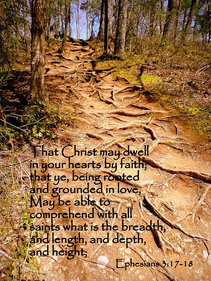 Cindy Photograph - Rooted Path With Scripture by Cindy Wright