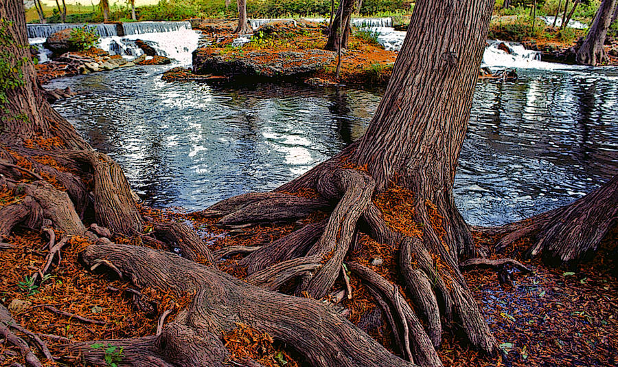 Roots On The River Painting  - Roots On The River Fine Art Print