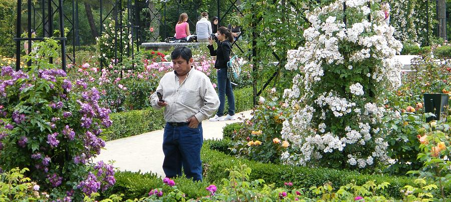 Rosaleda Park In The Retiro - Madrid - 2nd Photograph