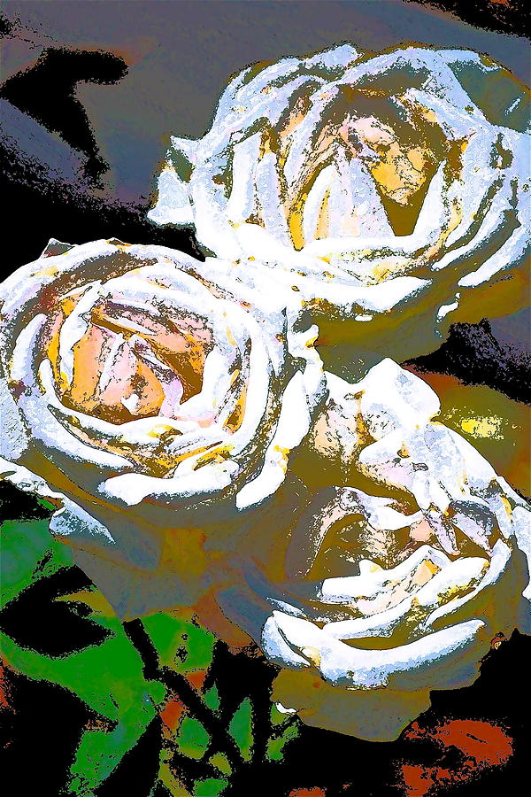 Rose 126 Photograph  - Rose 126 Fine Art Print