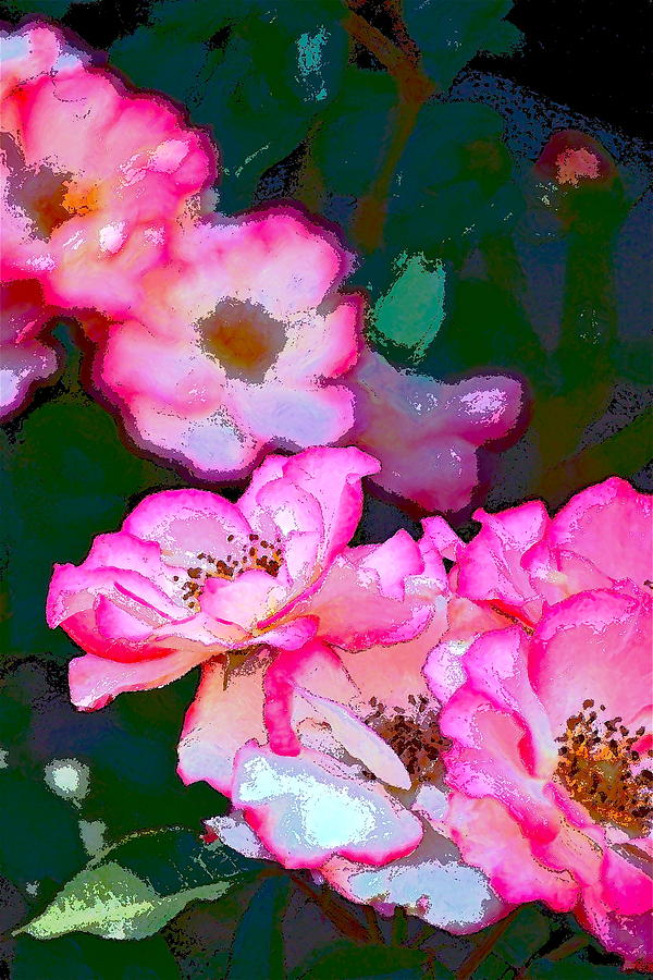 Rose 130 Photograph