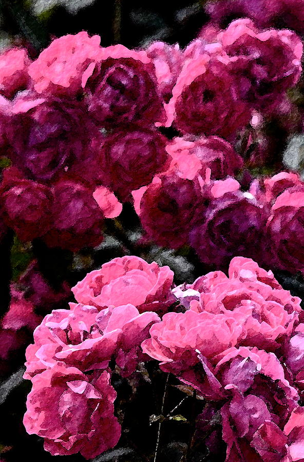 Rose 134 Photograph