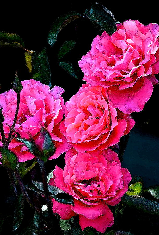 Rose 138 Photograph  - Rose 138 Fine Art Print