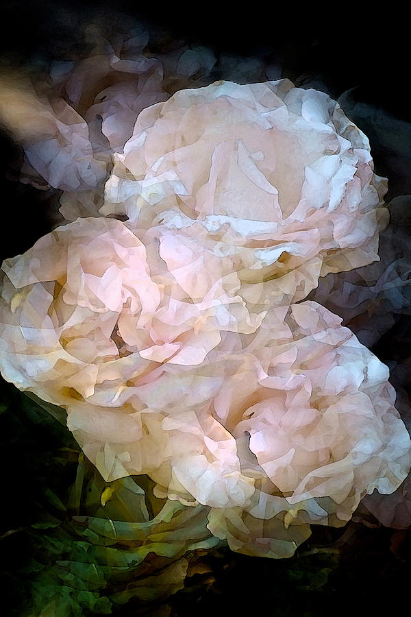 Rose 145 Photograph