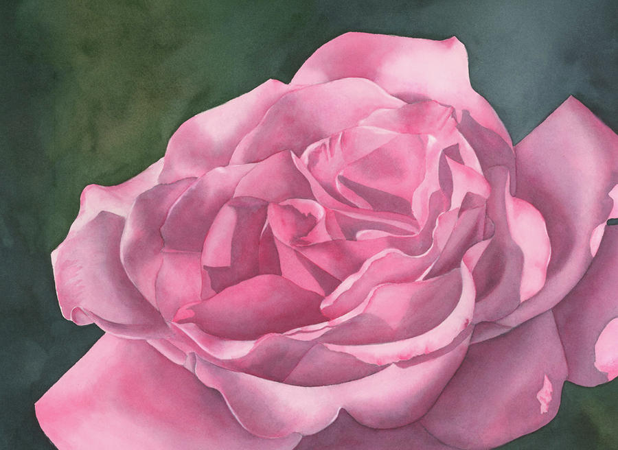 Rose Blush Painting  - Rose Blush Fine Art Print