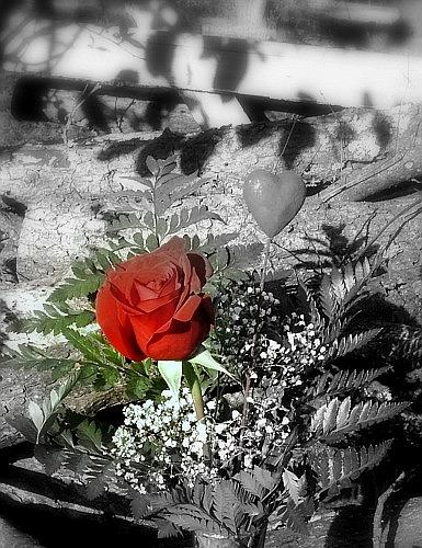 Rose Photograph - Rose by Cathyzcreations  Cathy Randall
