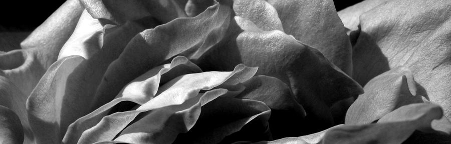 Rose Chips Photograph  - Rose Chips Fine Art Print