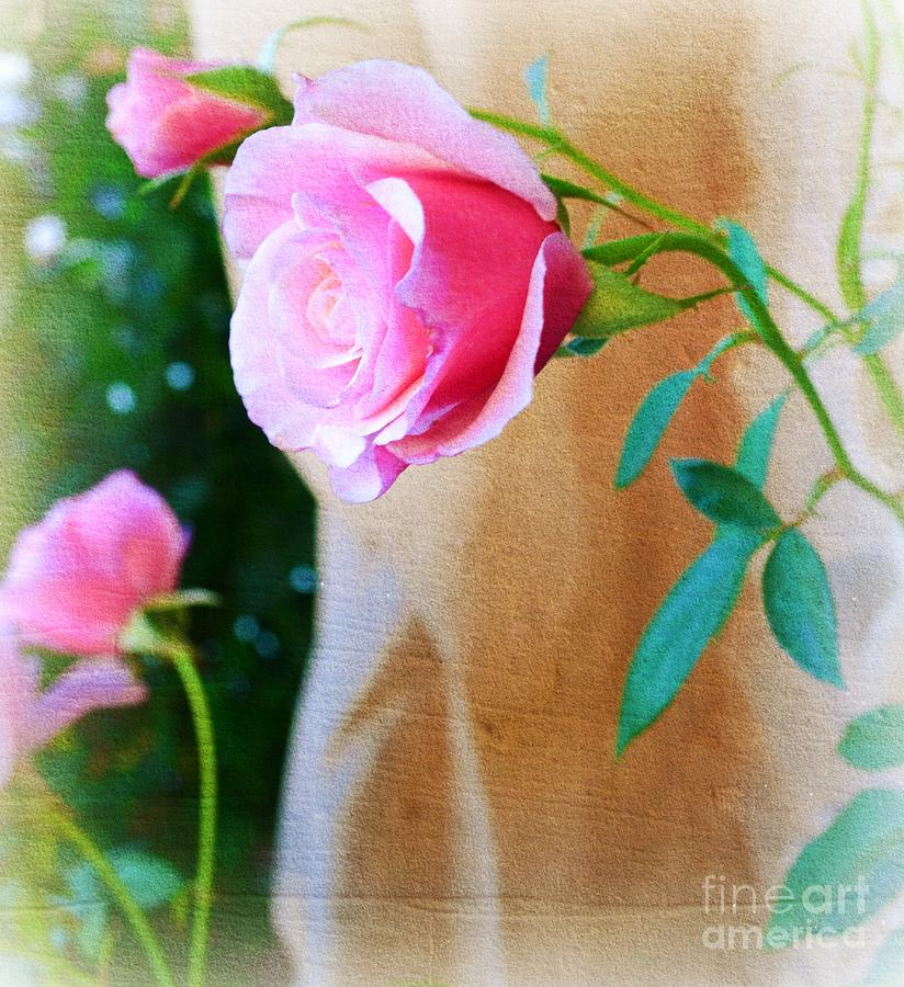 Rose In The Garden Photograph  - Rose In The Garden Fine Art Print