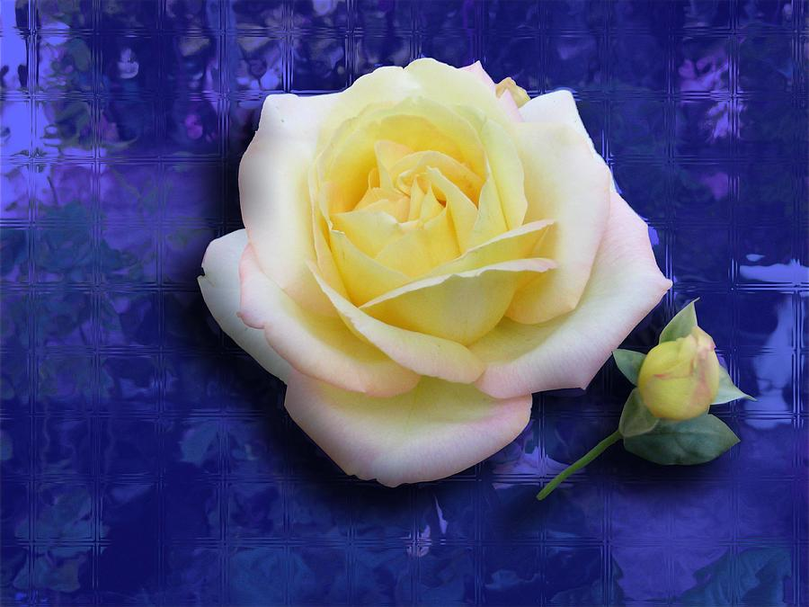 Rose On Blue Photograph