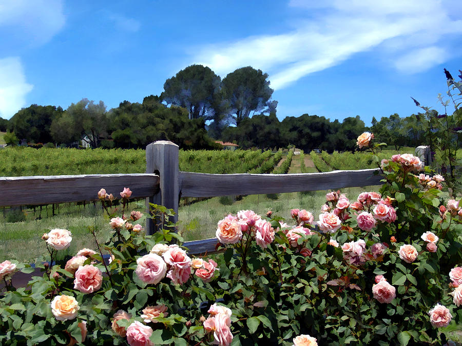 Roses At Rusack Vineyards Photograph