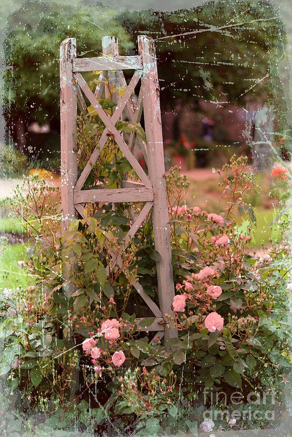Roses In Bloom Painting  - Roses In Bloom Fine Art Print