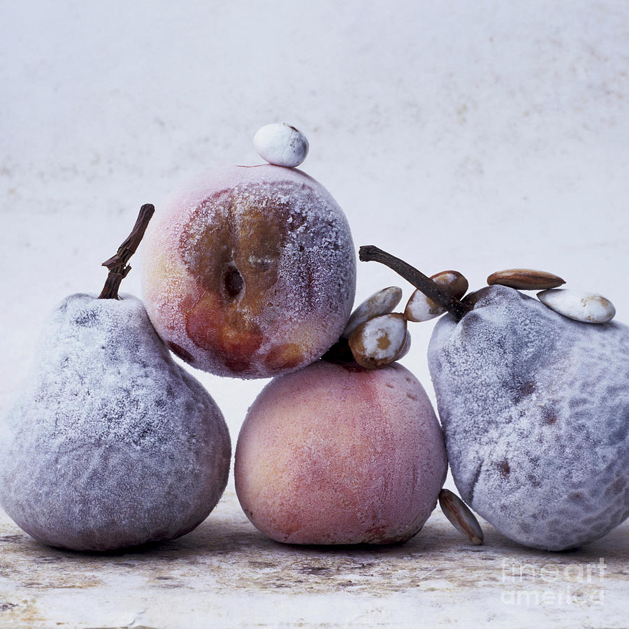 Rotten Pears And Apple Photograph