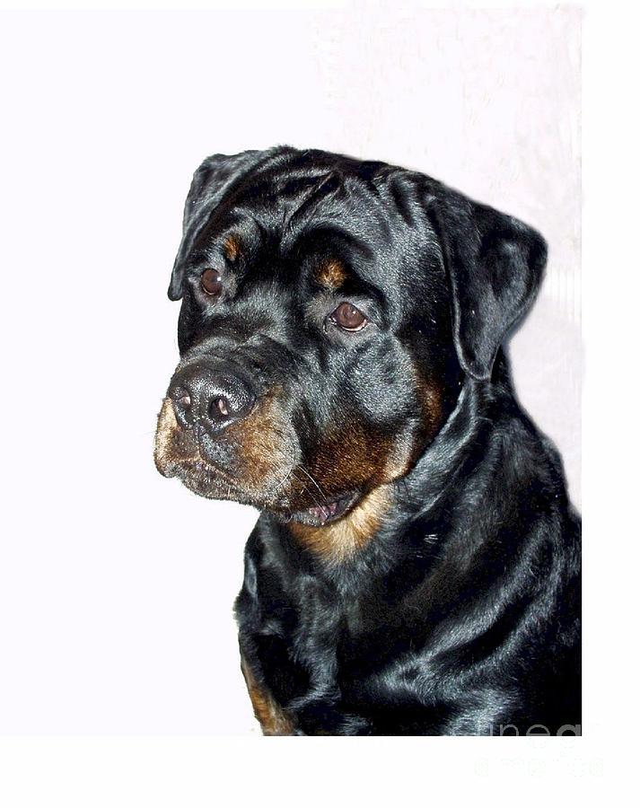 Rottweiler Digital Art Digital Art - Rottweiler 1539 by Larry Matthews