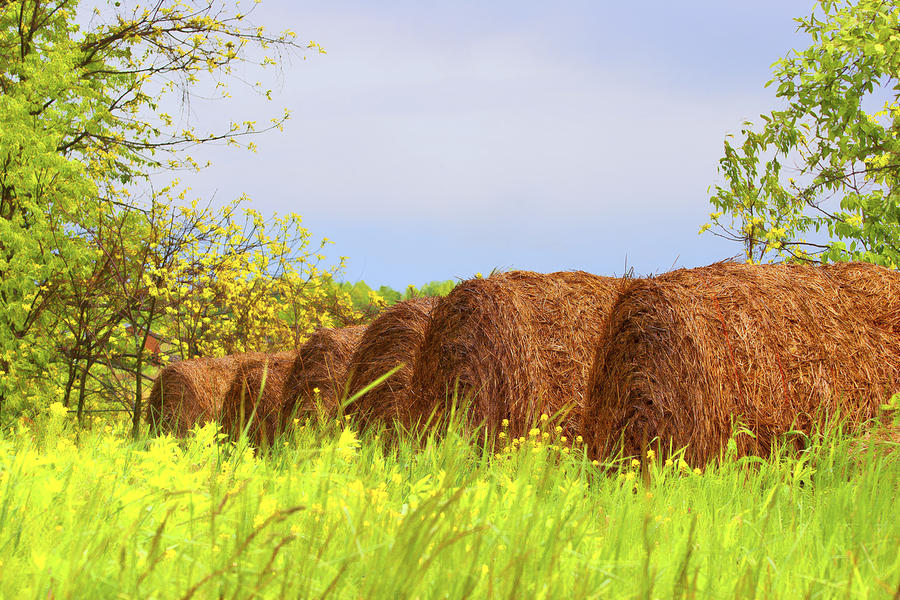 Agriculture Photograph - Round Bales by Tom Mc Nemar