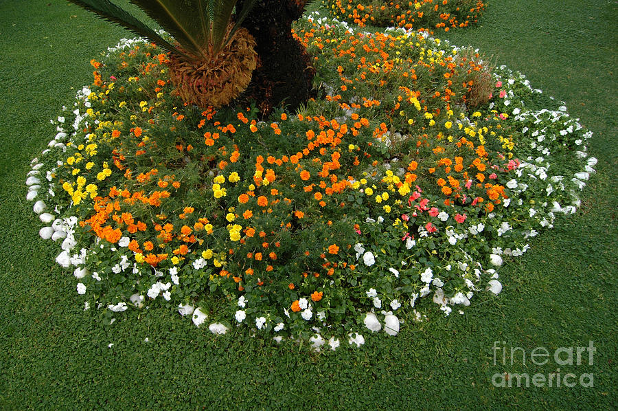 Round Flower Bed : Flower Photograph - Round Flower Bed And Cycad by Mike Nellums