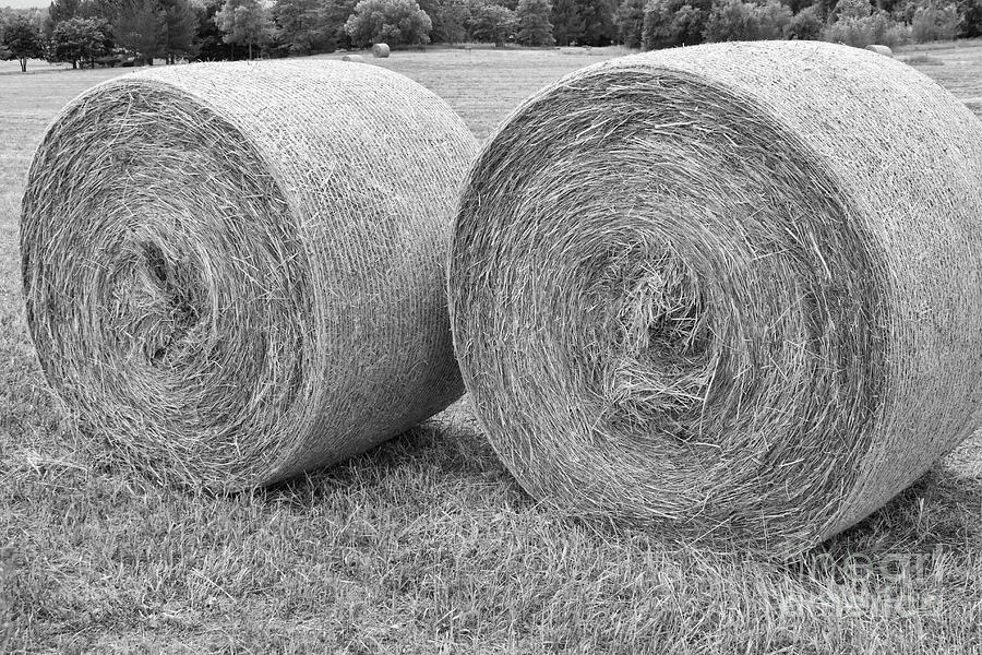 Round Hay Bales Black And White  Photograph