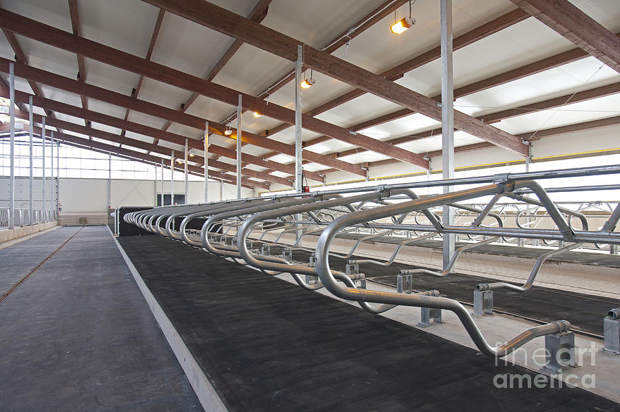 Row Of Cattle Cubicles Photograph