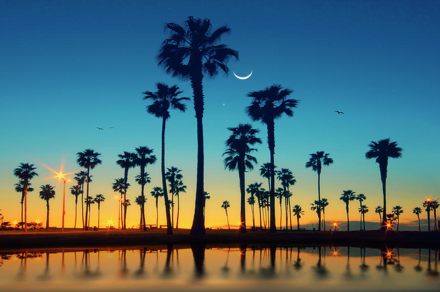Row Of Palm Trees Photograph  - Row Of Palm Trees Fine Art Print