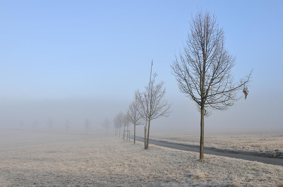 Row Of Trees In The Morning Photograph