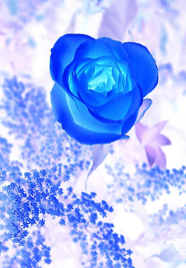 Royal Blue Rose by Linda Phelps