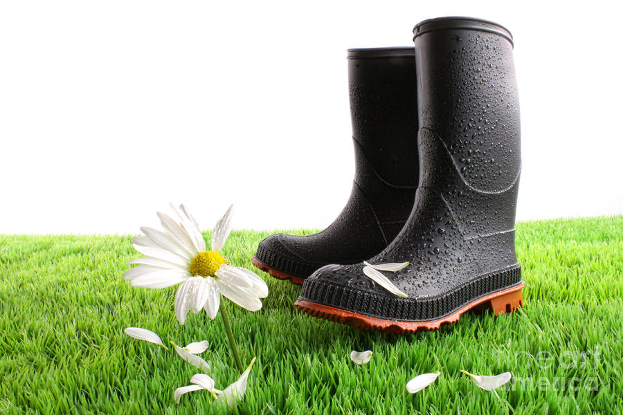 Rubber Boots With Daisy In Grass Photograph  - Rubber Boots With Daisy In Grass Fine Art Print