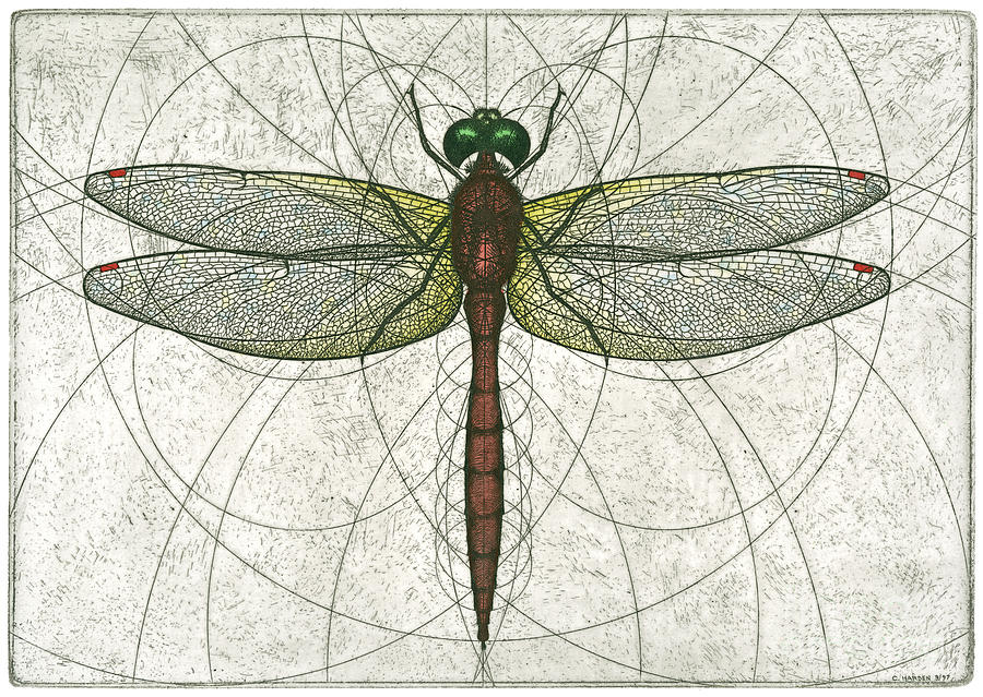 Ruby Meadowhawk Dragonfly Painting