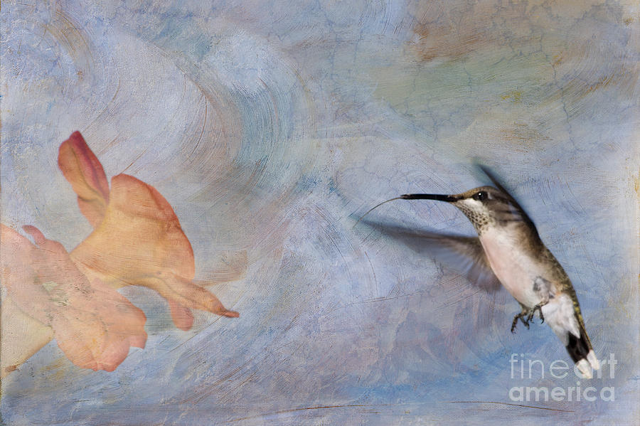 Ruby Throated Hummingbird 2 Photograph  - Ruby Throated Hummingbird 2 Fine Art Print