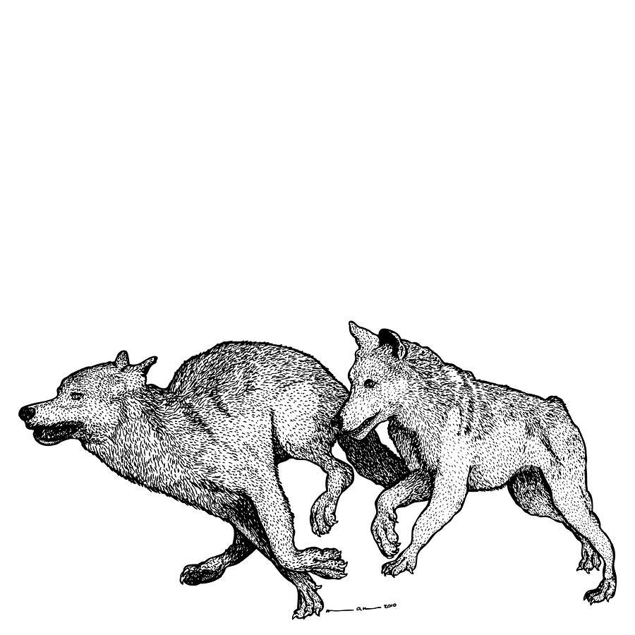 Running Wolves Drawing  - Running Wolves Fine Art Print