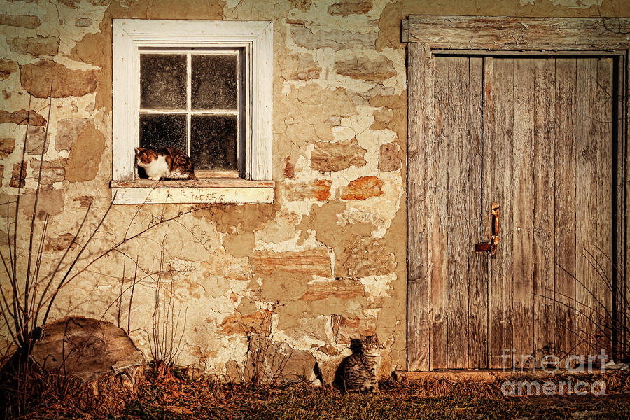 Rural Barn With Cats Laying In The Sun  Photograph