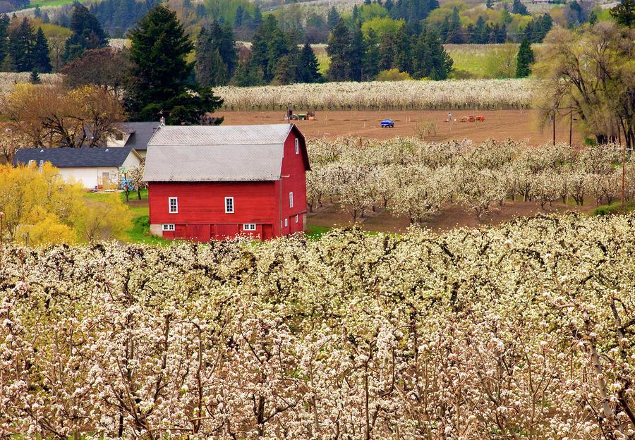 Rural Color Photograph